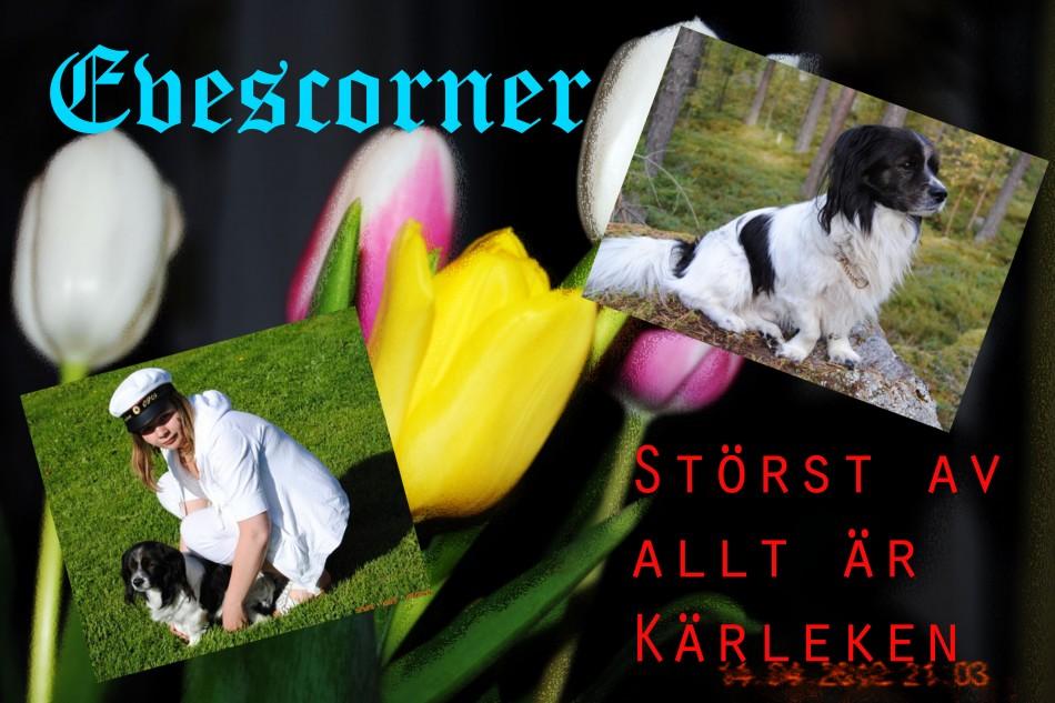 Evescorner - Mitt liv i dagboksformat